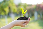 Woman hand holding green seedling