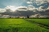 Sunshine over a dark cloud and a dirt road through a green field