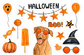 Lovable, pretty pet and halloween decorations. Close-up