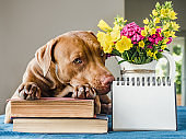 Beautiful bouquet of flowers and cute puppy