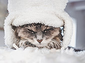Young kitty in a white wool hat