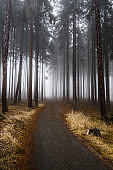 Mysterious Misty Forest In Czech Republic