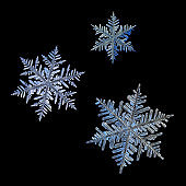Three real snowflakes isolated on black background