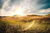 The Dune Landscape