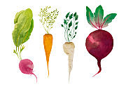 Hand painted watercolor set of root vegetables