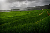 The beautiful scenery of the green terraced rice field with light rays while raining at Bong Piang forest in the rainy season in Mae Chaem, Chiang Mai, Thailand.