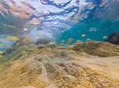 Many fish, anemonsand sea creatures, plants and corals under water near the seabed with sand and stones in blue and purple colors seascapes, views, sea life