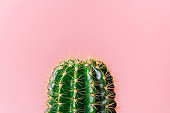 Close-up green cactus on a pink background. Minimal decoration plant on color background with copy space. Joyful color and stylish summer fine art for print and web design.