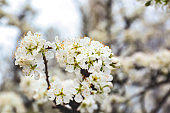 Beautiful blossoming tree branch outdoors