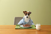 Cute funny dog at served table