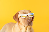 Adorable dog with reflection of green field in glasses on color background