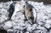 Tasty raw mackerel fish on ice