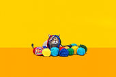 Obese cat with multicolored balls of wool threads on yellow background. British sort hair