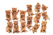 Ginger cats poses