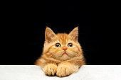 Ginger cat sitting on floor
