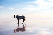 horse on lake