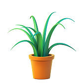 Vector of indoor plant in pot, realistic chlorophytum front view