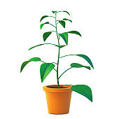 Vector of indoor plant in pot, realistic tree front view
