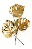 Gold monstera leaves plant frame isolated on a white background. top view. copy space. abstract.