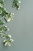 Green leaves top view on gray background with copy space. poster