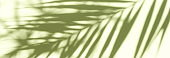 Abstract shadow background banner of natural palm leaves tree branch falling wall texture for background and wallpaper.
