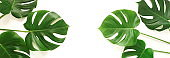 green monstera leaves pattern frame isolated banner on a white background. top view.copy space.