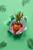 Small ripe orange pineapple cradled in human hands. Hands with the fruit show out of torn paper hole. Tropical green geometric background with palm leaves