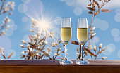 Two glasses of sparkling wine with white blooming flowers background.