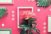 Creative flat lay with coral peony and exotic palm leaves on abstract geometric background with frames, rectangles and polka dots in white and green on pink paper.