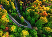 Aerial view of a road bend in a colorful forest