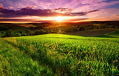 Colorful sunset scenery on green fields