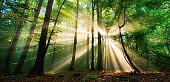 Luminous rays of sunlight in a misty green forest