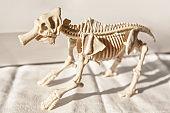 Skeleton of a monstrous animal