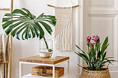 Trendy composition of home garden interior with wooden coffee table, a lot of plants and flowers in design pots, ladder, rattan decoration, macrame, personal accessories in stylish home decor.
