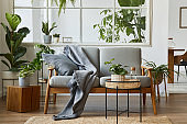 Modern scandinavian interior of living room with design grey sofa, armchair, a lot of plants, coffee table, carpet and personal accessories in cozy home decor. Template.