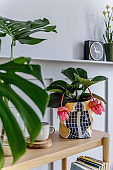 Trendy living room interior with wooden console, beautiful plants, tropical leaf, book, air plant, shelf, decoration, grey wall, wood panels and personal accessories in stylish home garden.