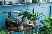 Stylish living room interior filled a lot of beautiful plants in different design pots on the brown retro shelf. Composition of home garden jungle. Modern home decor. Floral concept. Template.