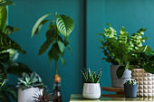 Stylish floral composition with beautiful plants, cacti and succulents in design and hipster pots on the marble coffee table. Green botany living room. Home gardening concept. Template. Blossom plant.