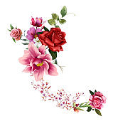 watercolor painting of leaves and flower, rose on white background