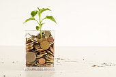 Plant Growing In Savings Coins