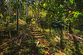 Goa, India. View Of Road Lane Path Way Old Steps In Jungle Surrounded By Tropical Green Vegetation, Trees And Bushes In Sunny Day