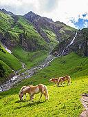 Idyllic Mountain Landscape Horses Meadow Alps Sunshine Vertical