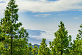 View throght the pines to the ocean shore covered with fog. Tenerife, Canary islands, Spain.