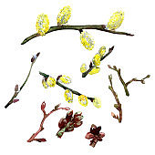Set of branches with buds on a tree in spring drawn in watercolor.