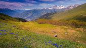 Idyllic alpine landscape at springtime with wildflowers near La rosiere, Vanoise – French alps
