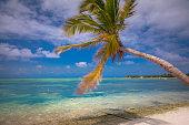 Idyllic Beach with tropical palm tree – Saona island, Caribbean sea