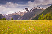 Idyllic alpine landscape with wildflowers at springtime in Vanoise, near Bonneval-sur-Arc – French alps