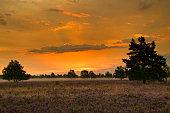 Sunrise Sunset in the Lüneburg Heath