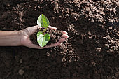 Top view hand of person holding abundance soil with young plant in hand   for agriculture or planting peach nature concept.