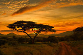 Sunset and sunrise in tsavo East and Tsavo West National Park in Kenya